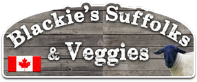 Blackie's Suffolk Sheep & Veggies