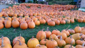 Blackies - Pumpkins